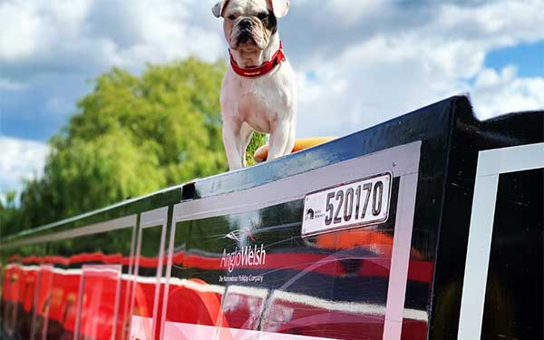 Anglo Welsh's top 10 pet friendly getaways