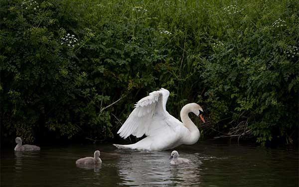 Celebrate Britain's diverse wildlife this Spring